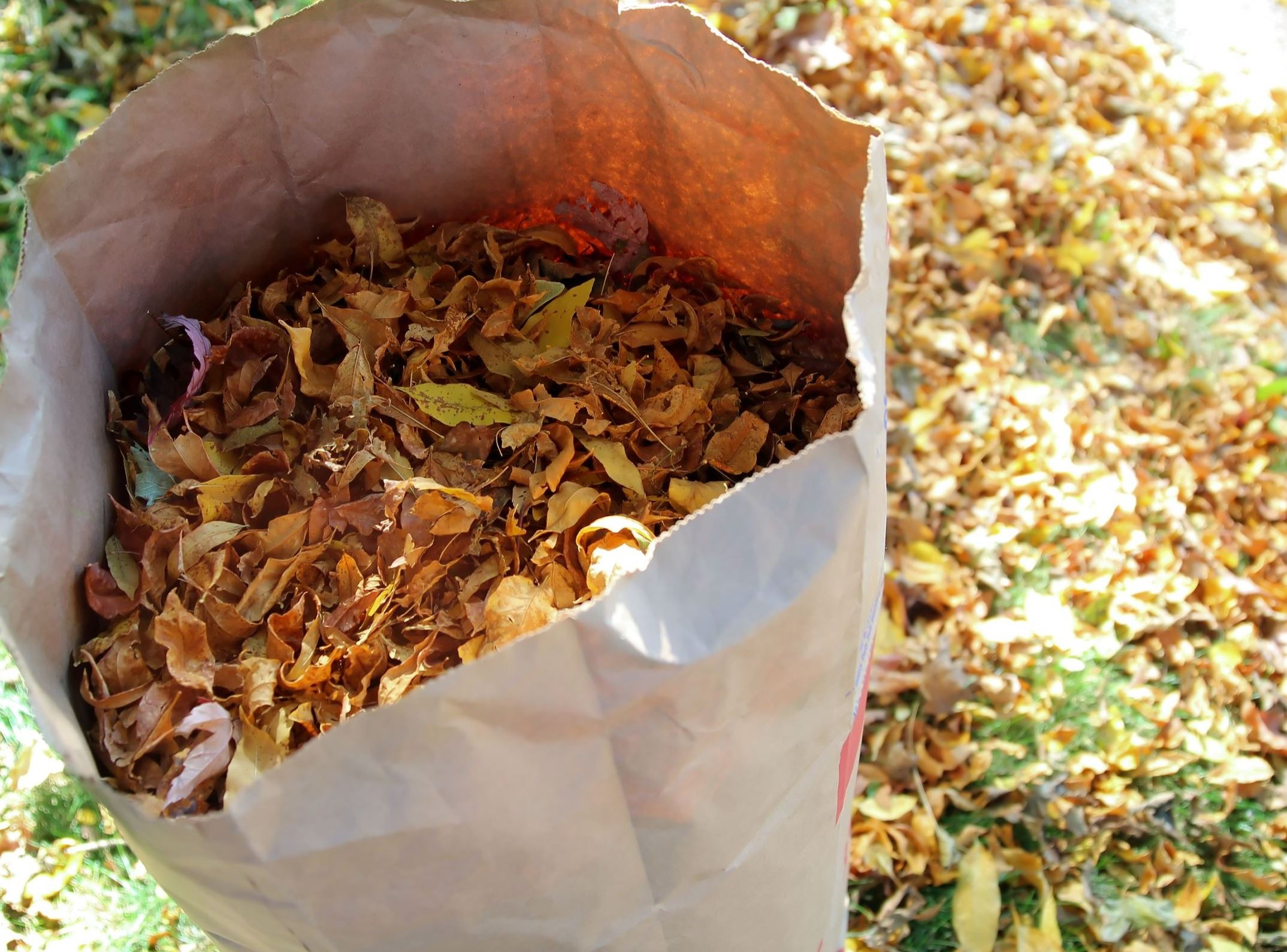 Photo of a bag of leaves standing upright on top of a pile of leaves. Leaves are red, yellow, orange