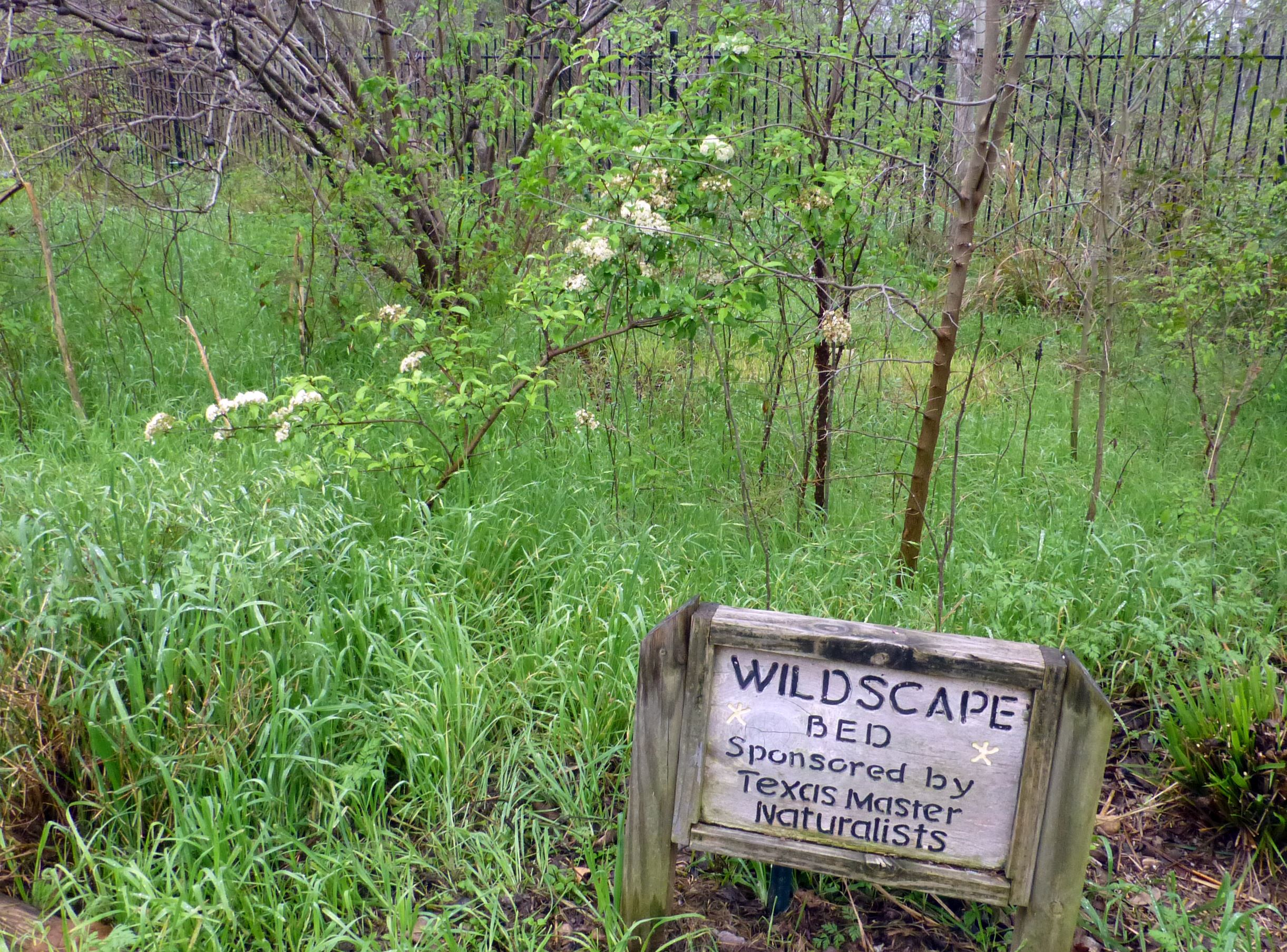 Wildscape bed sponsored by Texas Master Naturalists
