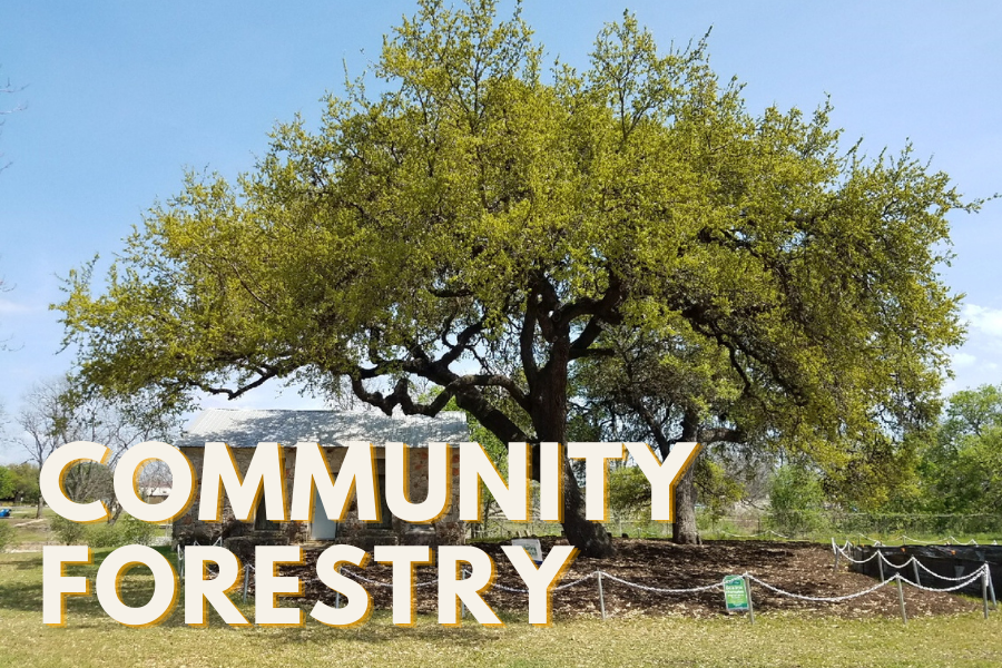 COMMUNITY FORESTRY text over image of large oak tree