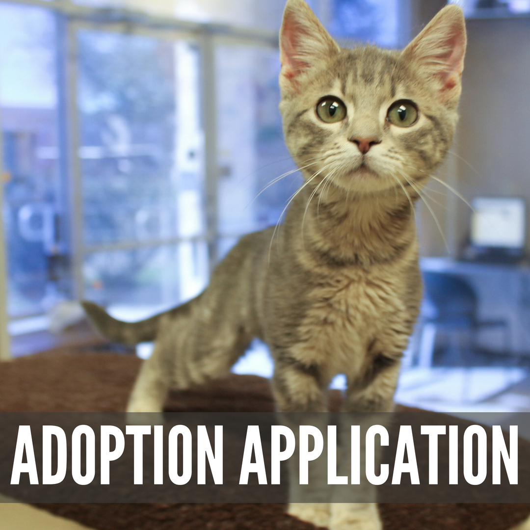 "A grey tabby kitten with the text ""Adoption Application"" superimposed"